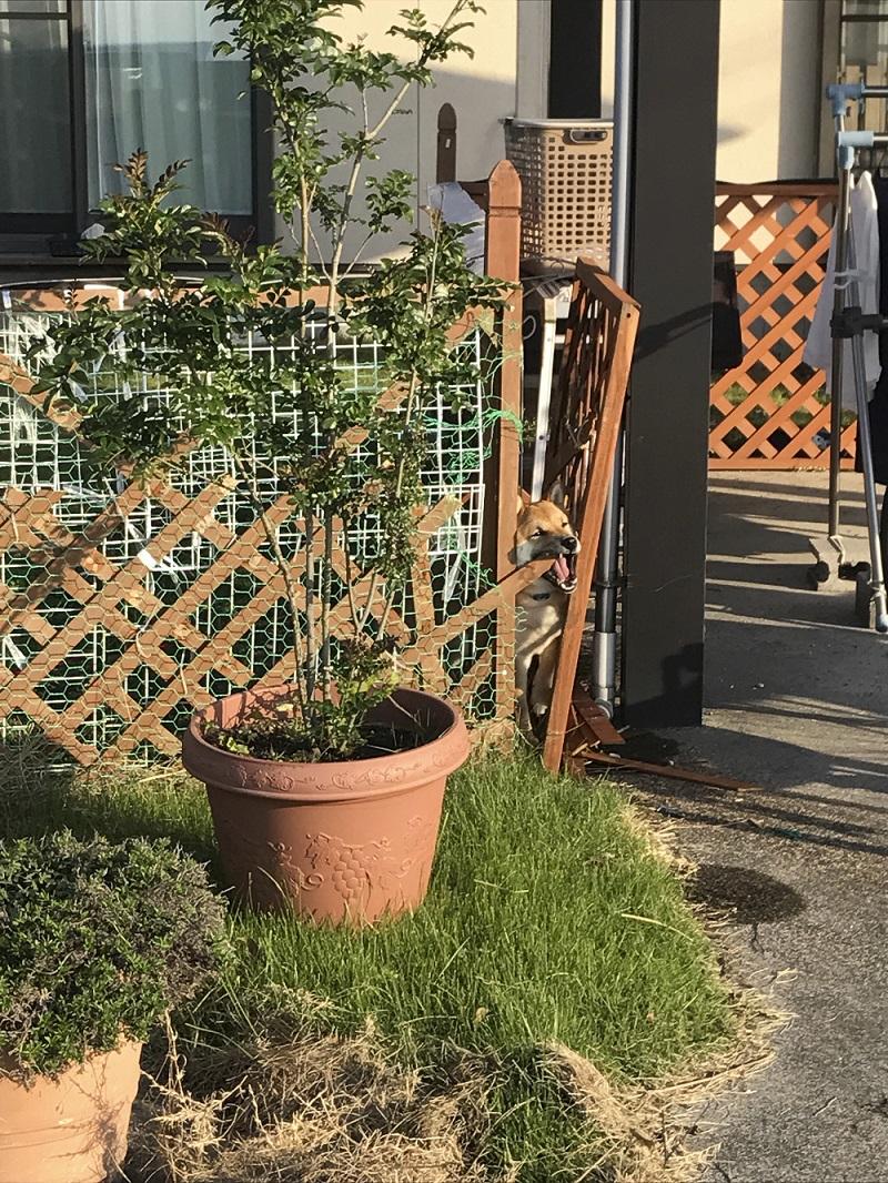 20171130施工事例(Y様邸 Before)